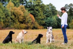 Dog trainer giving etiquette training to 4 dogs