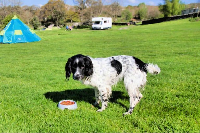 a dog eating food in the park