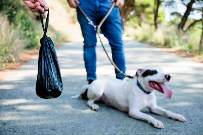man holds a poop bag while dog is sitting on the road