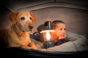 little boy with a dog on bed inside the tent
