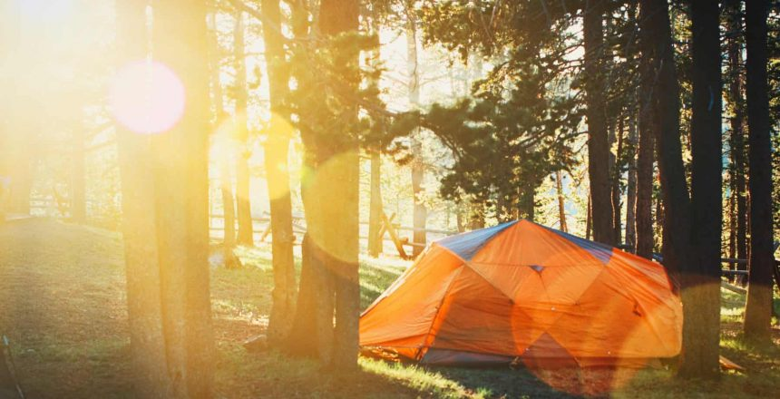 Canva - Photo of Tent in Forest (1)